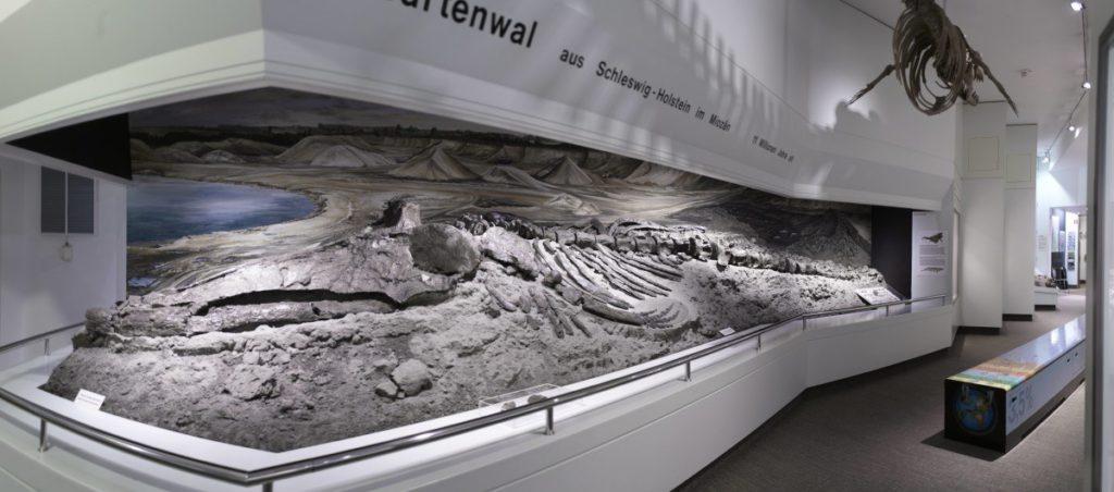 Copyright Museum für Natur und Umwelt Lübeck