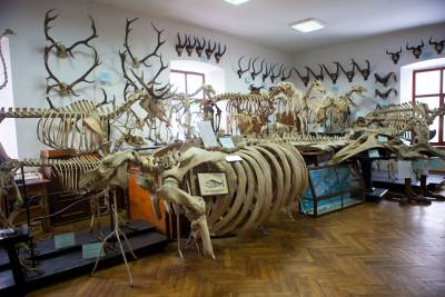 The Benedict Dybowski Zoological Museum